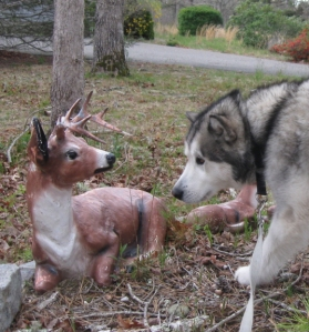 The fictional Wolfie is based on the very real Travvy. He wooed at the deer, but the deer wouldn't move.