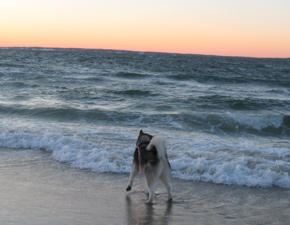 Dog at edge of ocean