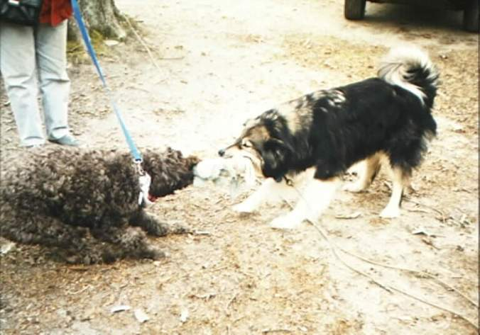 Not ready to let go: The late Rhodry (1994–2008), right, and his buddy Rosie.
